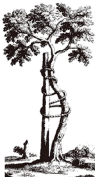 アンドリの木